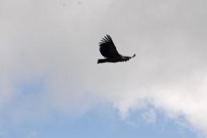 Oiseau pour témoignage